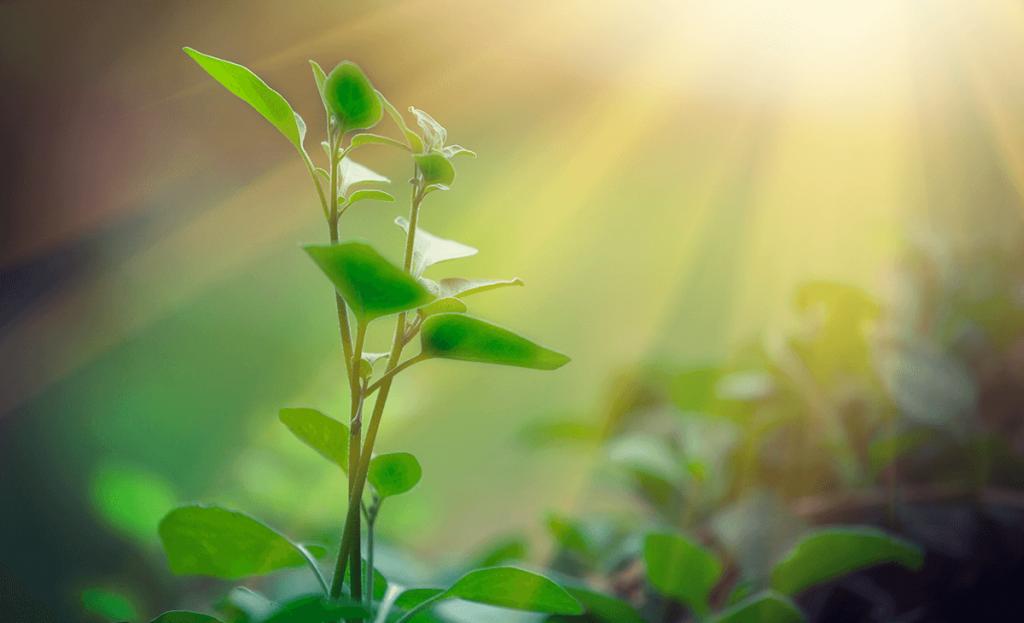 corrida-pela-sustentabilidade-apple-ira-construir-usina-solar-para-consumo-proprio-1