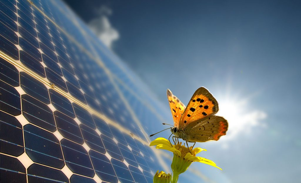 energia-renovavel-5-razoes-para-comecar-a-investir-agora-2