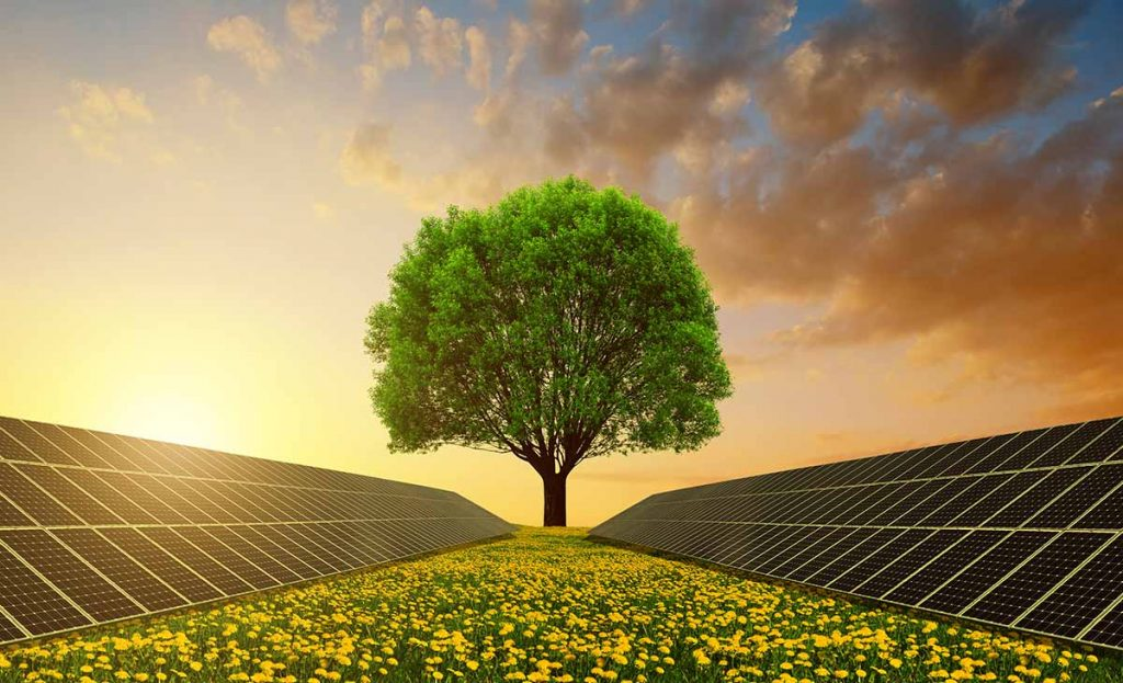 Resultado de imagem para energia solar agro